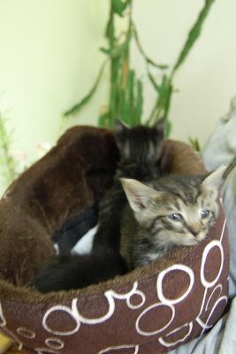 Foto zu Meldung: Tierheim hat wieder 3 Jungkatzen gerettet!