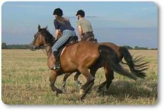 Foto zur Meldung: Pferdeland Seenland Oder-Spree geht in die Umsetzung