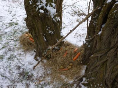 Foto zu Meldung: Ein Futterbaum für die Tiere
