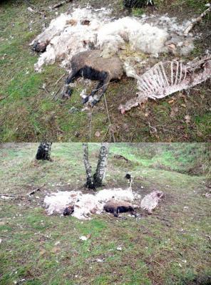 Foto zu Meldung: Illegale Entsorgung von toten Tieren