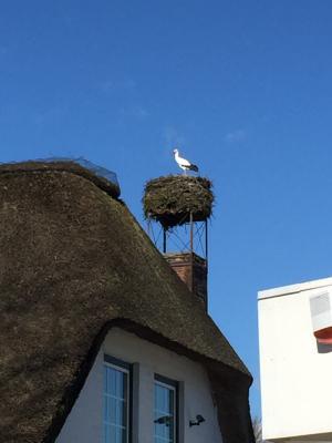 Foto zur Meldung: Der Storch ist da