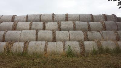 Foto zur Meldung: Aktuelle Zahlen und Fakten zu europäischer Landwirtschaft
