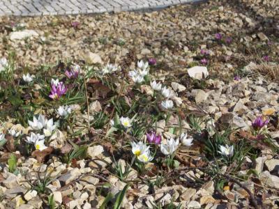 Foto zur Meldung: Frühlingsboten