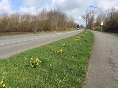Foto zur Meldung: Blühendes Dorf Dank Bürgerverein