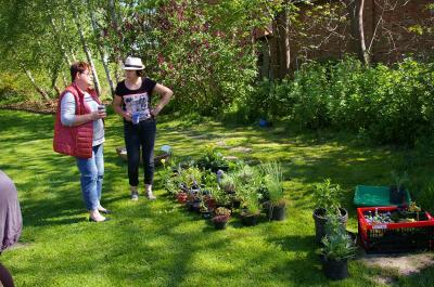 Foto zur Meldung: Tag des offenen Gartens mit Pflanzentausch