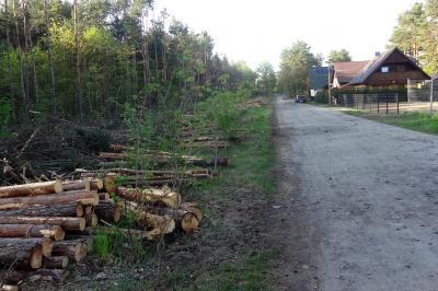 Foto zu Meldung: Holzeinschlag an der Fuchsbergstraße
