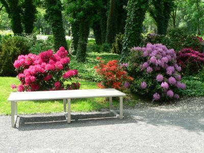 Foto zur Meldung: Besuch im Rhododendrontal des Optikparks