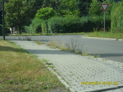 Foto zu Meldung: Straßenreinigung ist nicht nur Pflicht der Stadt