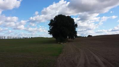Foto zu Meldung: Acker- und Grünland in Bayern weiter am teuersten