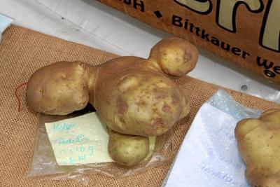 Foto zur Meldung: Kartoffelolympiade 2016