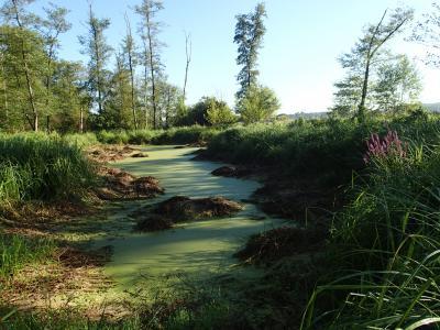Foto zu Meldung: Wo der Nauheimer Wald wild ist - Exkursion durch den Gemeindewald am  4. Hessischen Tag der Nachhaltigkeit am 22. September