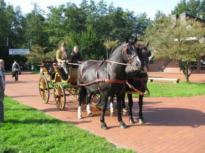 Foto zur Meldung: 7. Tag des Ostfriesischen und Alt-Oldenburger Pferdes im Museumsdorf Cloppenburg