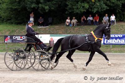 Foto zur Meldung: Lancano Bundeschampion 2011