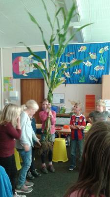 """Foto zur Meldung: Unterrichtseinheit der Klasse 3a zum Thema """"Getreide"""""""
