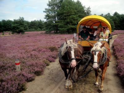Foto zu Meldung: Wanderungen der Ketziner Senioren