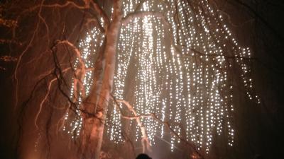 Foto zur Meldung: Christmas Garden in Berlin: einzigartiges winterliches Lichterlebnis