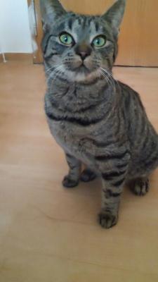 Foto zu Meldung: Katzeneigentümer gesucht