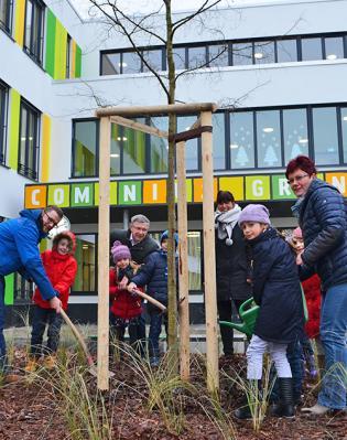 Foto zu Meldung: Comenius-Grundschule: Baumpflanzung beendet Außenarbeiten