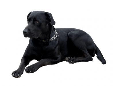 Foto zur Meldung: Hinweis an alle Hundebesitzer