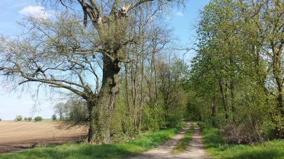 Foto zur Meldung: REGION: Gemeinsamer Wanderwart im Raum Storkow/Scharmützelsee