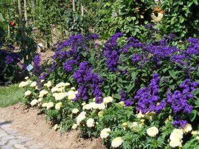 Foto zur Meldung: Hernjokl erwartet von Rosenfreunden Konzept zum Rosengarten am Dosseteich