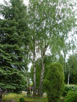 Foto zu Meldung: Wichtiger Hinweis zur möglichen neuen Baumschutzsatzung