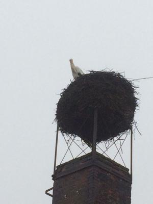 Foto zur Meldung: Der Storch ist in Schafflund angekommen