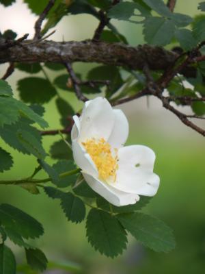 Foto zur Meldung: Gartenspaziergänge in des Einhorns Weißer Garten