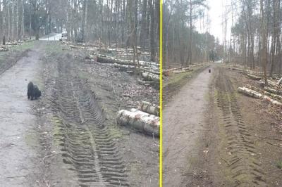 Foto zu Meldung: Durchforstung und Holzeinschlag