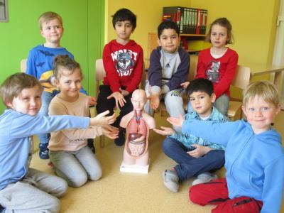Vorschaubild zur Meldung: Vorschulkinder lernen ihren Körper kennen - Kindergarten Regenbogen