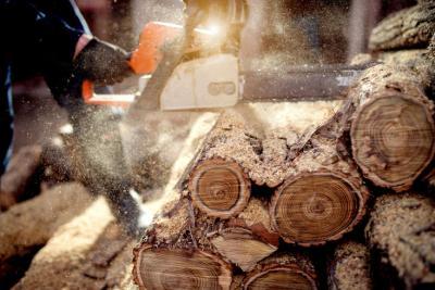 Waldaktionstag im Hohenzollern Skistadion