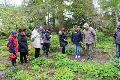 Foto zur Meldung: Foersters Senkgarten und Näsers Blütenreich: Rosenfreunde auf den Spuren von Potsdamer Gärtnern