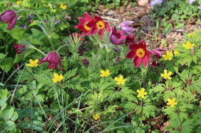 Foto zur Meldung: Phlox gegen Storchschnabel: Pflanzentausch am Sonntagscafé in Jabel