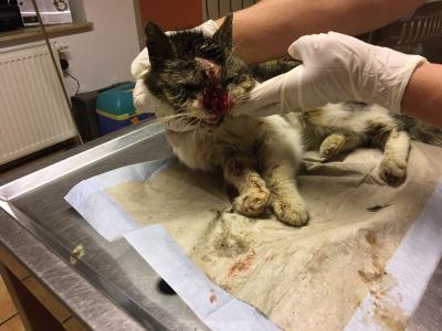 Vorschaubild zur Meldung: Einsatz in Barth - Meldung einer schwer verletzten Katze!