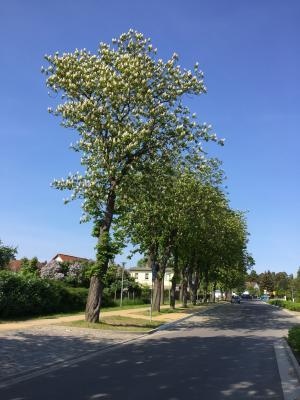 Foto zu Meldung: alles schöne macht der Mai