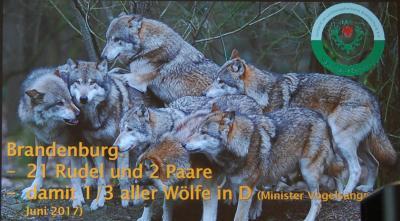 Foto zu Meldung: Wölfe, Biber, Kormorane und Waschbären