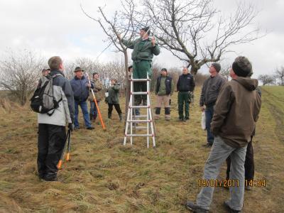 Vorschaubild zur Meldung: Obstbaumschnittlehrgang (Jungbaumschnitt) am 23.03.19 in Wohlsborn