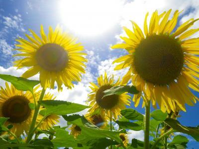 Vorschaubild zur Meldung: Sommerurlaub: SteP ab 17.07.17 wieder erreichbar