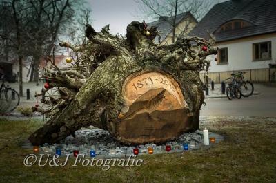 Foto zur Meldung: 17.12.2016 - Rückblick Wurzeleinweihung unserer gefällten Friedenseiche