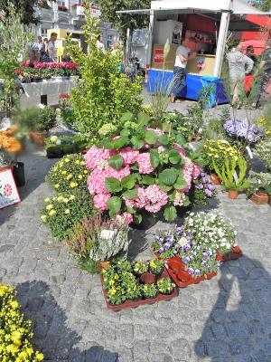 Herbstmarkt in Beeskow