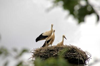 Foto zu Meldung: Storchentaufe
