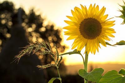 Foto zur Meldung: Schöne Sommerferien!