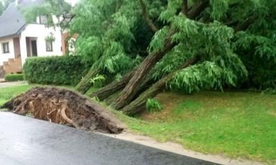 Foto zu Meldung: Information zu Sturmschäden