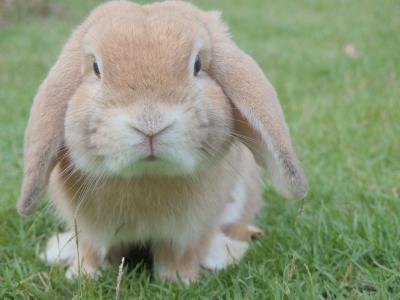 Vorschaubild zur Meldung: Kaninchen-Jungtier-Ausstellung in Köthensdorf