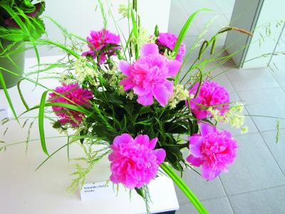"""Foto zur Meldung: """"Gartenschönheit in Vasen"""" - Ausstellungseröffnung auf der Freundschaftsinsel Potsdam"""