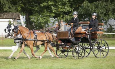 Brandenburger Pferdesommer Wettbewerbe und Show im Landesbreitensportturnier Berlin-Brandenburg am 26. und 27. August 2017 im Erlebnispark Paaren
