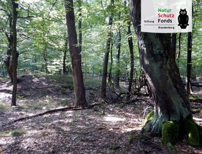 Vorschaubild zur Meldung: Naturkundliche Führung durch den Schweinert am 14.9.17, ab 17:00 Uhr