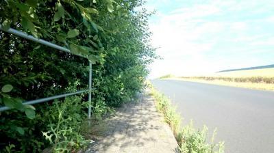 Hecken und Sträucher wuchern über den Gehweg
