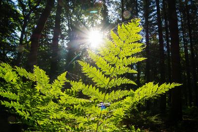 Foto zu Meldung: Keine Waldverschmutzung zulassen