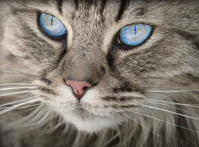 Erste Hilfe Kurs Katze